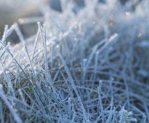 Tavolo Frost